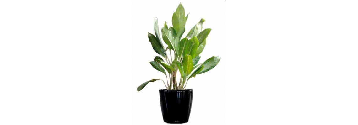 Rent Plants